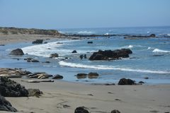 San Simeon Elephant Seals - junio Fotos de archivo libres de regalías