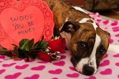 San Valentino felice Fotografia Stock Libera da Diritti