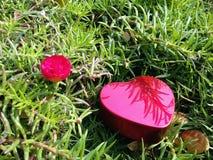San Valentino felice del cuore Fotografie Stock Libere da Diritti