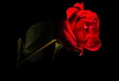 San Valentino Rosa Fotografia Stock