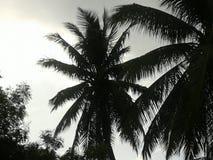 Sanary Photographie stock libre de droits