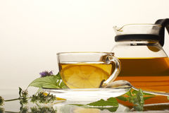 Sanative tea Royalty Free Stock Photos