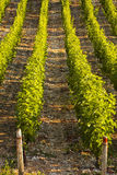 Sancerre abstract Royalty Free Stock Photo