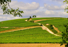 Sancerre hillside vines, France stock photos