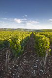 Sancerre scenic vineyards Stock Photos
