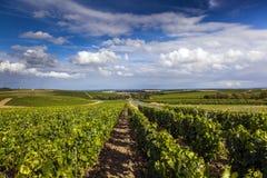 Sancerre Vineyards. Vineyards in Sancerre Area in France stock images