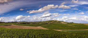 Sancerre Vineyards Royalty Free Stock Images