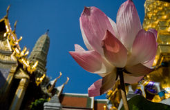 Sanctity Lotus. Photo by Toneimage of China,at Grand Palace,travel in Tailand Stock Photo