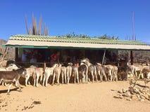 Sanctuaire d'âne d'Aruba Photo libre de droits