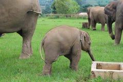 Sanctuaire d'éléphant Photos libres de droits