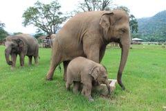 Sanctuaire d'éléphant Image stock
