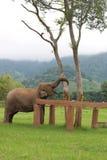 Sanctuaire d'éléphant Photo libre de droits