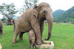 Sanctuaire d'éléphant Photographie stock