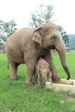 Sanctuaire d'éléphant Photographie stock libre de droits