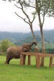Sanctuaire d'éléphant Image libre de droits