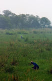 Sanctuaire d'oiseau de Sultanpur (9/9) Photos stock
