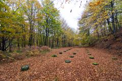 Sanctuary in Sarmizegetusa in autumn. Rock piles. Ruins. Sarmizegetusa was the capital capital of the Dacian Empire. Today is a UNESCO World Heritage Site Royalty Free Stock Images