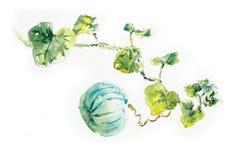 Sandía Bosquejo del jardín Ejemplo dibujado mano de la acuarela ilustración del vector