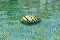 Sandía que flota en una piscina con el piso de tejas verde Imágenes de archivo libres de regalías