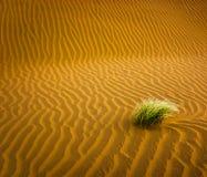 Sandöken med gräs Arkivbild