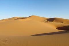 Sandökendyn i Sahara Royaltyfria Foton