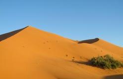 Sandökendyn Sahara Fotografering för Bildbyråer