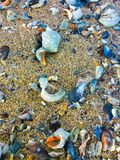 sand royaltyfri foto