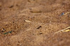 Sand Royalty Free Stock Photography