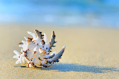 On sand. Shell on sand on beach Stock Photos