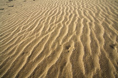 Sand. 's ripples in the sicilian beach with strong wind Royalty Free Stock Photos