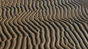Sand abstract pattern. African zebra pattern in the sand abstract  background Stock Image