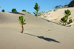 Sand, Aeolian Landform, Singing Sand, Dune Stock Images