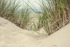 Free Sand And Grass In The Dunes Stock Images - 83806304