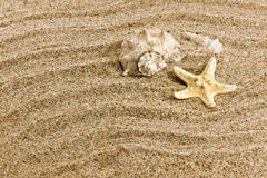 Free Sand And Sea Shell Stock Photos - 8558093