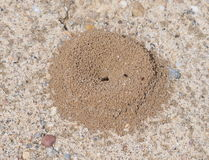 Sand anthill Royalty Free Stock Photos