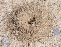Sand anthill Stock Photo