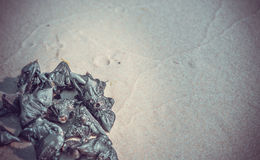 Sand and aquatic plants Stock Images