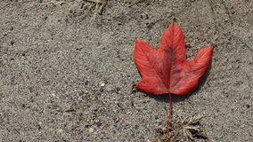 Sand autum leaf. Sand beach and autum leaf even though it was already winter time at ORchard Beach, Bronx NY Royalty Free Stock Photography