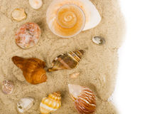 Sand background with exotic shell Royalty Free Stock Image