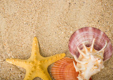 sand background with exotic shell Stock Photos