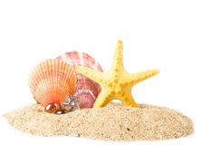Sand background with exotic shell Royalty Free Stock Photos