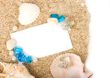 Sand background with exotic shell. Beautiful sand background with exotic shell Royalty Free Stock Image
