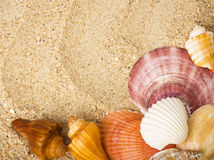 Sand background with exotic shell Stock Photo