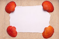 Sand Background with Four Shells Blank Sign Stock Image