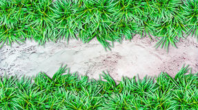 Sand  background and grass Stock Image