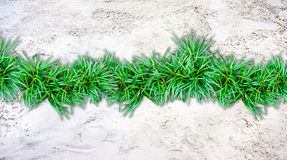 Sand  background and grass border Stock Photos