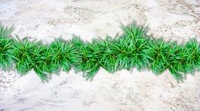 Sand  background and grass border. Center Stock Photos