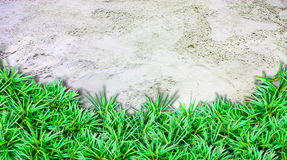 Sand  background and grass border under. On the beach Stock Photo