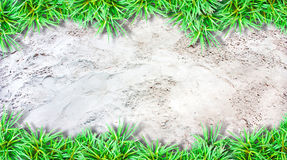 Sand  background and green grass border Stock Image