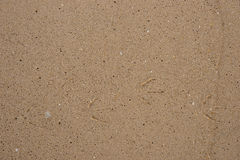 Sand background with little bird traces Royalty Free Stock Photos